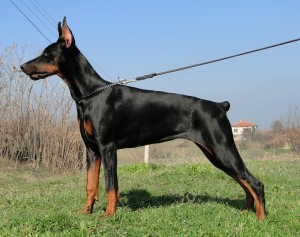 Защитникът на България Deya (Pride на Русия Sidor & Tahi-Reme Tarabee)